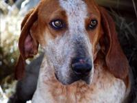 Hound - Sport - Large - Adult - Male - Dog Sport is a