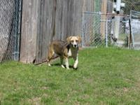Hound - Stone - Large - Baby - Male - Dog Call  for