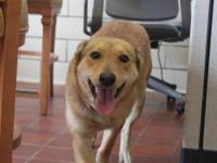 Hound - Tara - Medium - Adult - Female - Dog Tara is