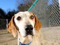 Hound - Teeka - Large - Baby - Female - Dog Hi! My name