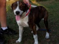 Hound - Tiger-holiday $100 - Medium - Young - Male -