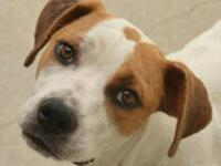 Hound - Tj - Medium - Young - Male - Dog Please visit