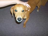 Hound - Tucker - Urgent - Medium - Young - Male - Dog