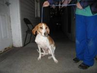 Hound - Whisper - Medium - Young - Male - Dog Poor