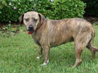 Hound - Zoey - Medium - Adult - Female - Dog
