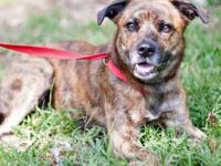Hound - Jack Ct - Large - Young - Male - Dog Jack is a