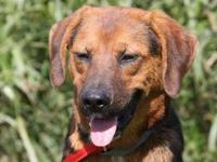 "Hound - Rufus - Medium - Adult - Male - Dog Rufus"" is a"