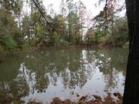 Beautiful Huge 48 plus Acres. No Deed Restrictions, No