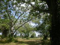 The Property has frontage on FM 1489, scattered pecan