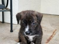 This pint sized cutie is Houston, one of five of