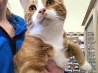 Howie is a handsome and lovable 4 year old cat.He does
