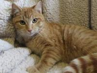 Howie's story Howie is an incredibly loving boy. He'll