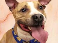 Huck's story Hi, I'm Huck!! I'm a fun, ball of energy