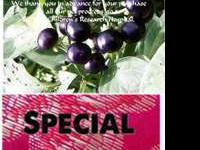 Huckleberry, Garden Rare Heirloom Seeds, Order now,