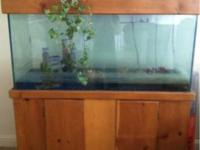 I am selling my salt water fish tank for $260. I'm not