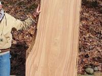 The beauty of this added huge piece of Siberian Elm