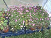 Huge Plant sale ~ April 12 & 13.....Friday from 2pm -