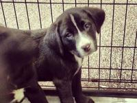 For the Love of Rescue will be holding a huge puppy and