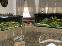Huge saltwater fish tank system. There's a 100 gal ,