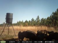. Still hunt Leasing on over 2500 Acres in GA for the