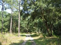 This diverse 269 acre tract is made up of pine,