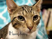 Humphrey's story The adoption fee is $85.00 with an