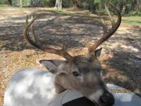 Hunt Deer and Turkey in Florida. Join Now for the 2012