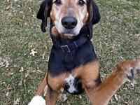 Hunter's story Hunter is a male, 7 year old Coonhound