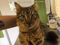 HUNTER's story Clay County Animal Control Hours of