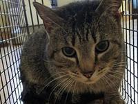Hunter's story Hunter Age: 4 years old DMH/Neutered