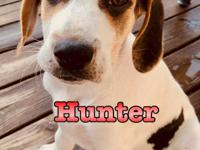 Hi! I'm Hunter, a hound mix that was born in Georgia.