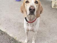 Hunter's story Hunter is a 2 year old gentle soul with