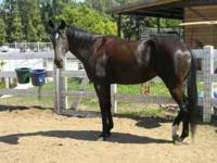 4yr old TB filly jockey club registered, previous track