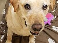 Hunter's story Sweet Hunter is approximately 7 year