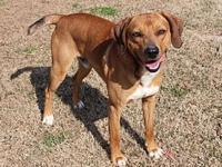 HUNTER LAW's story Hunter is a one year old mix of