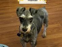 Hunter's story My name is HUNTER  I am a 10 year-old
