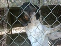 I have 3 Hunting Dogs that need a good home! We've