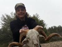 Texas Trophy Sheep Hunt.  2 nights lodging - included