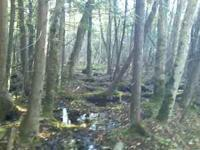 40 acres of pure hunting heaven await you! This land is