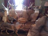 Many various mounts, deer, pronghorn antelope, caribou.