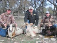 www.shoot2killguideservice.com trophy sheep hunt -