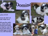 DOMINO IS SOLD MACY IS SOLD SPARKY IS SOLD MAVERICK is