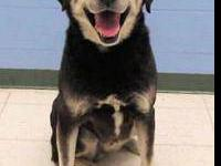 Husky - Inca - Large - Senior - Male - Dog For complete