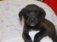 Husky - Tina - Large - Adult - Female - Dog Tina is a