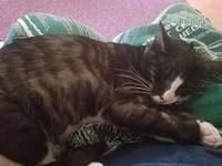 Hutch's story Hutch is super sweet and great with cats,