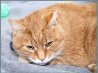 My story $97.50 FEE INCLUDES: neutering/spaying,