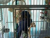 We are trying to sell a Hyacinth Macaw. Her name is