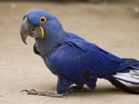 Hello, we are giving these 12 months old lovely macaws