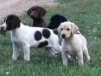 Adorable puppies now available! We additionally have
