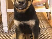 Hydra's story Hydra is a 10 week old mixed breed
